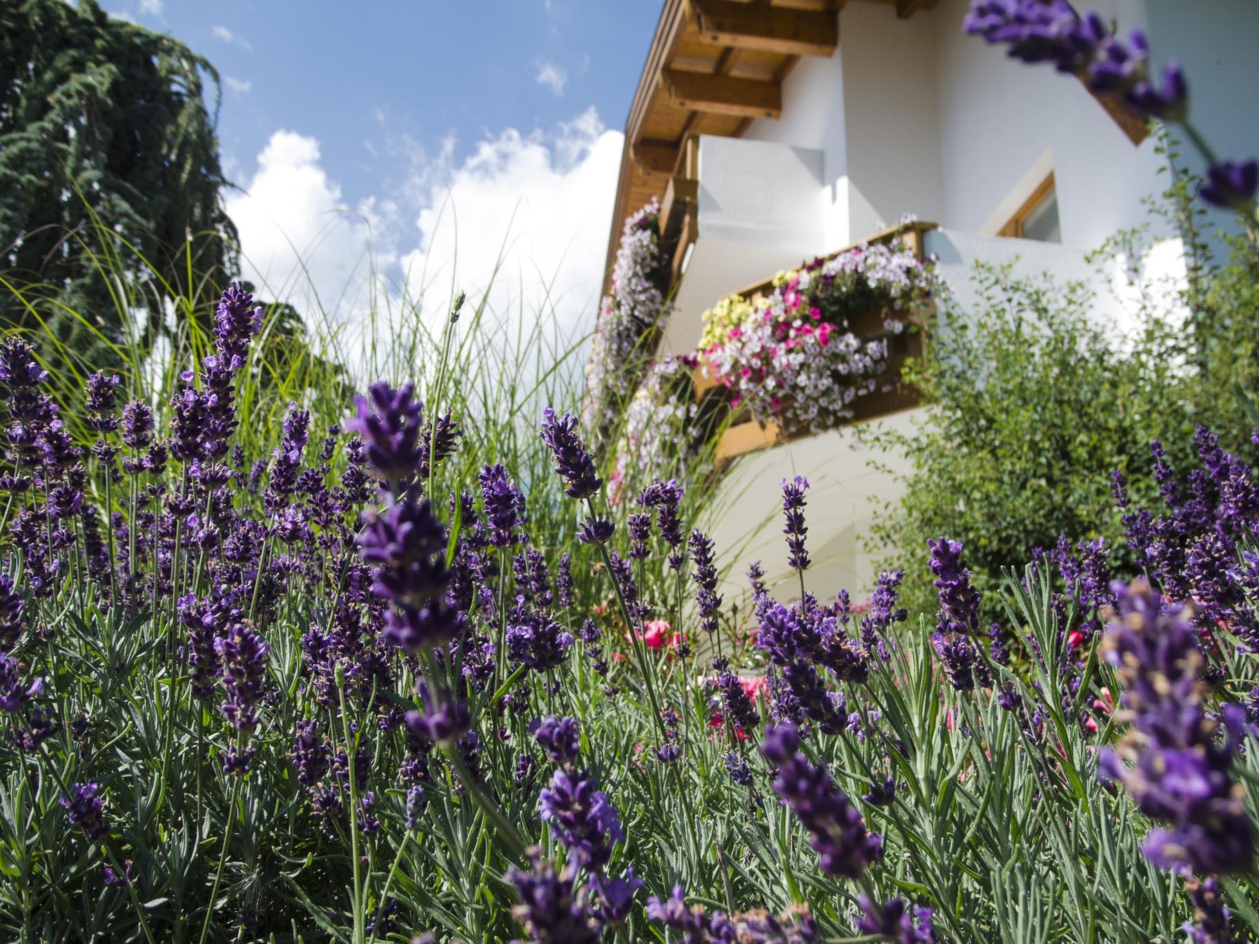 Sulla Collina, garden, lavender