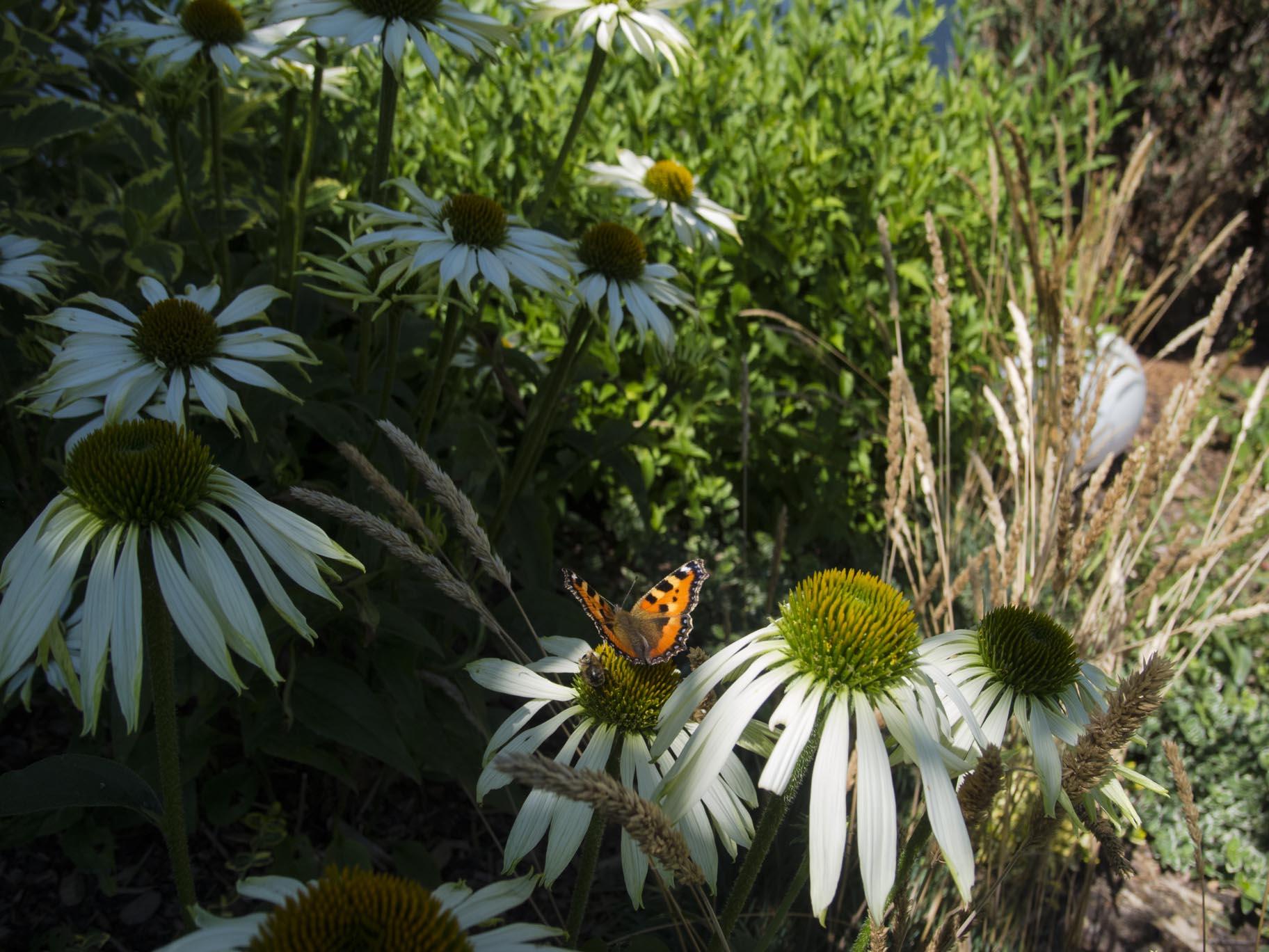 Garten, Schmetterling, Kleiner Fuchs